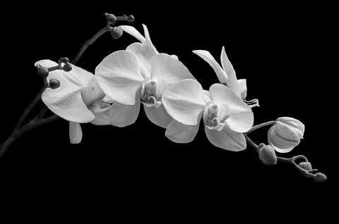 Orchid No. 5